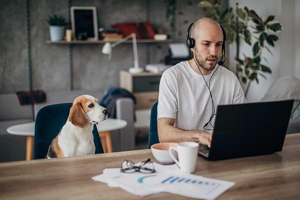 Nghiên cứu của Microsoft: Làm việc từ xa giảm năng suất 10%